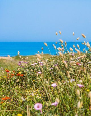 Sardinian nature