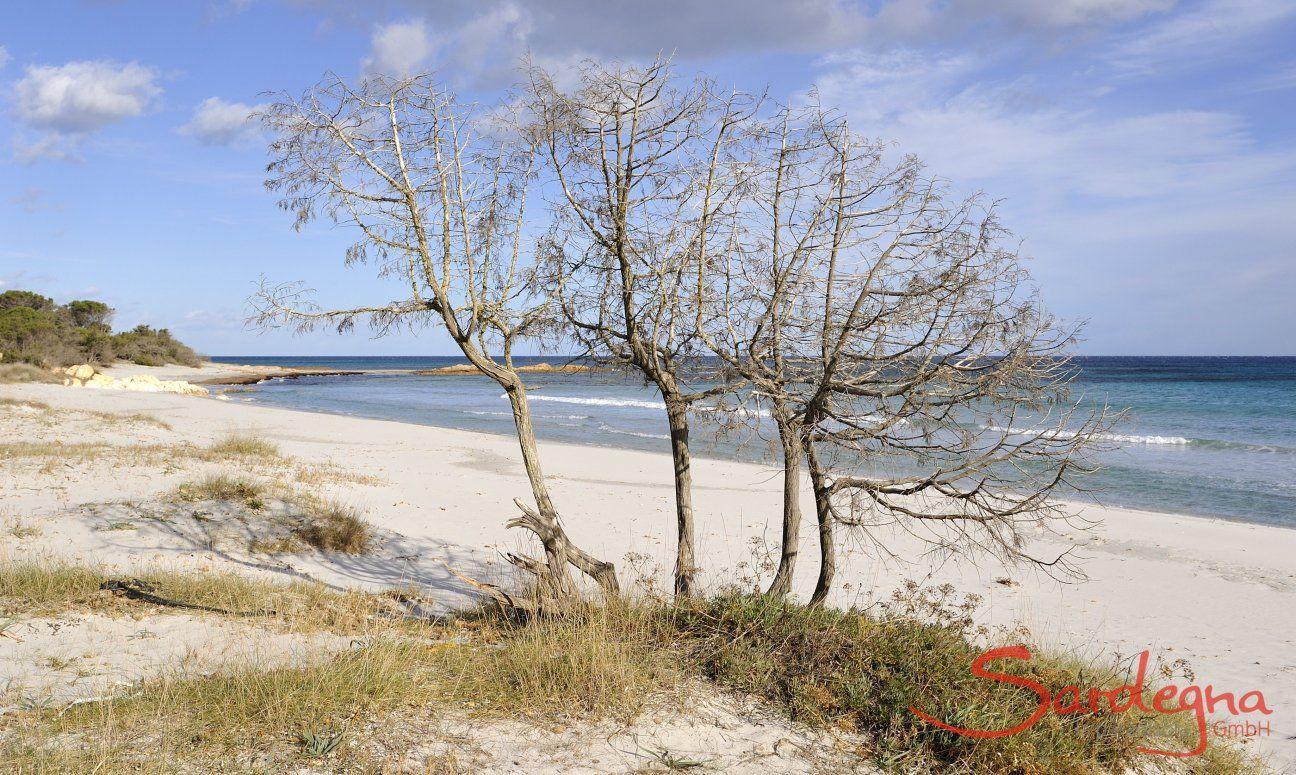 Cala Ginepro is just one of the beautiful beaches of the gulf of Orosei