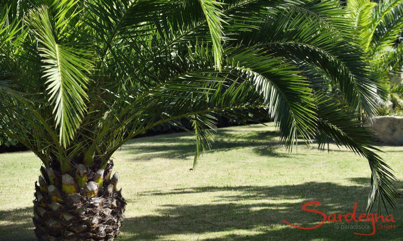 Palmtrees in the groomed garden