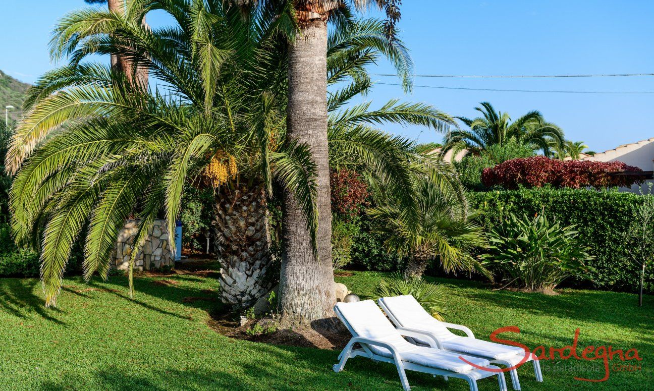 Garden with sunbeds under palm trees