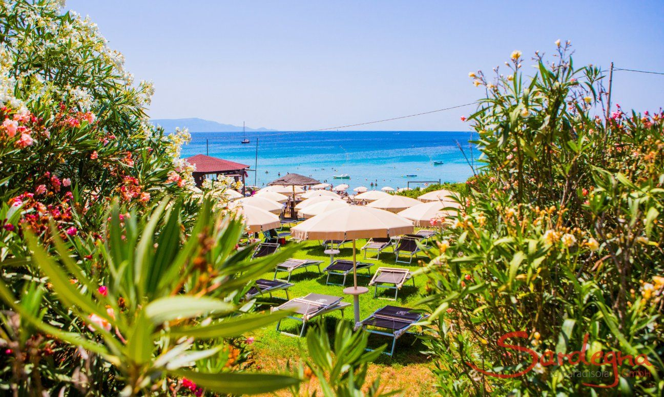 View over oleander bushes and parasols on the blue sea in front of the beach Le Bombarde Alghero