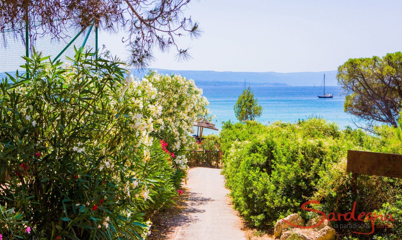 Access to the beach Le Bombarde Alghero over a pathway through green mediteranean plants
