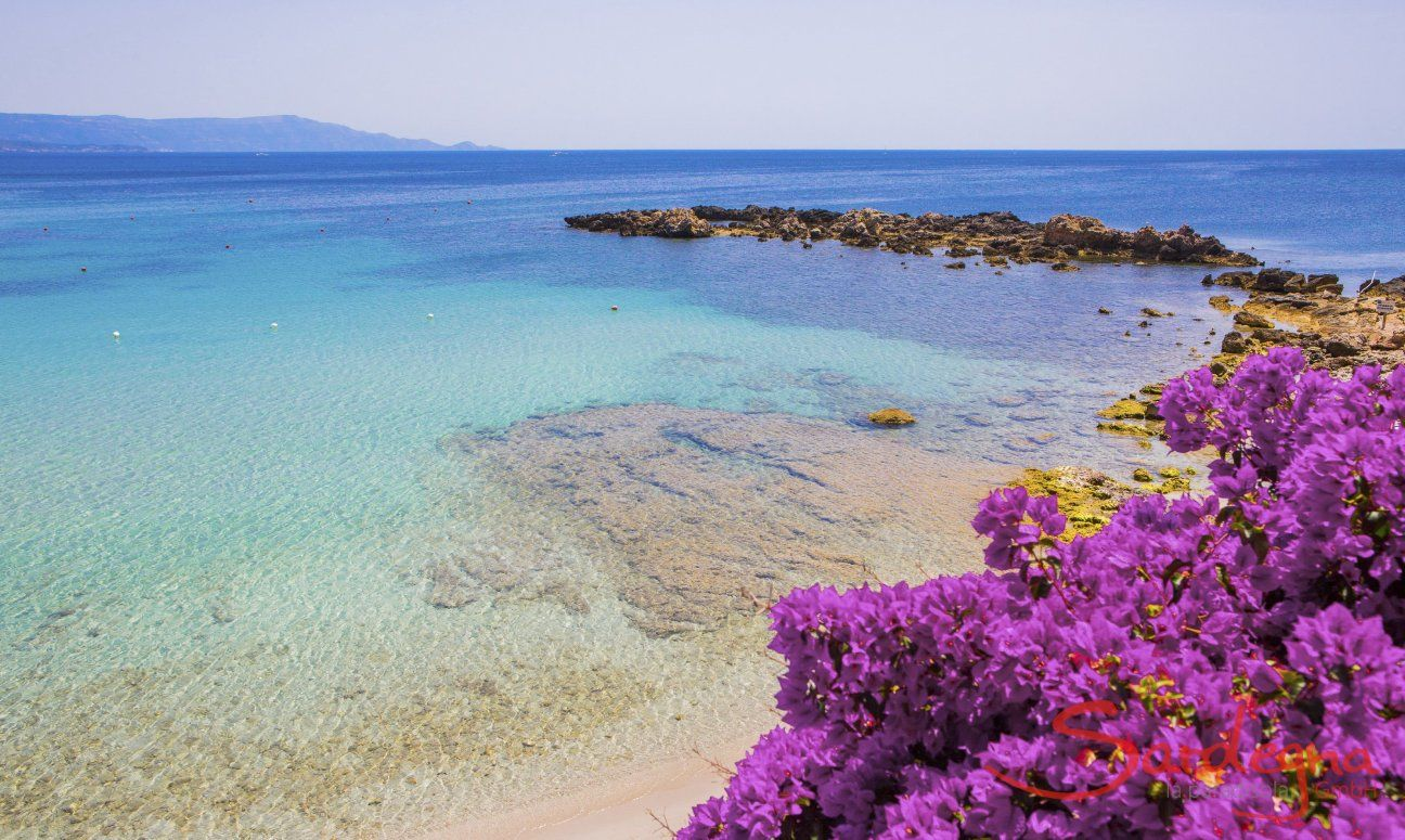 Crystal clear water and violet flowers of Bougainville in the bays close to Alghero
