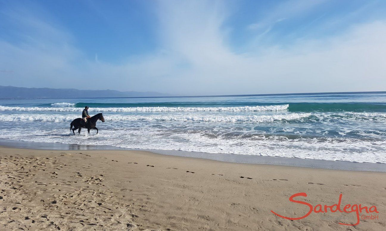 Rider with horse riding through the shallow water in front of the long waves of the Poetto beach in Cagliari