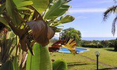 Garden with a view towards the sea