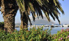 Harbour of Porto San Paolo behind the leaves of a big palm tree