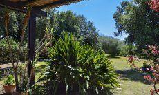 Exotic plants in the garden of Villa Mimosa