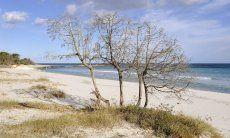 Natural beach of Cala Ginepro close to Cala Liberotto